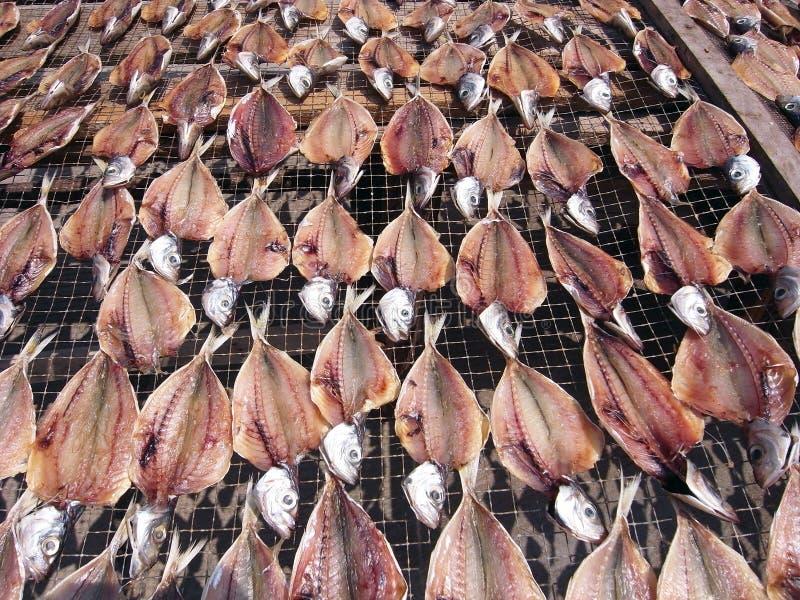 Trocknende Fische stockfoto