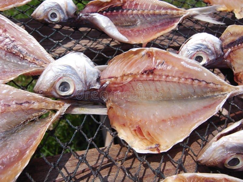 Trocknende Fische stockbilder