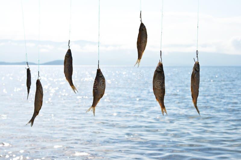 Trocknende Fische auf dem Hintergrundmeer stockfotos