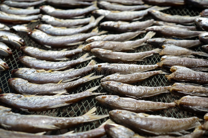 Trocknende Ozeanfische im oreder auf Fischnetz beanspruchen unter starkem sunligh stark stockbilder