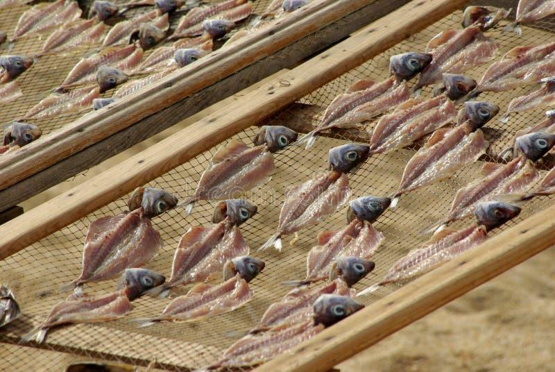 Trocknende Zahnstangen der Fische lizenzfreies stockbild