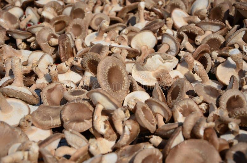 Download Trocknender Pilz stockfoto. Bild von ernährung, trocken - 27734228