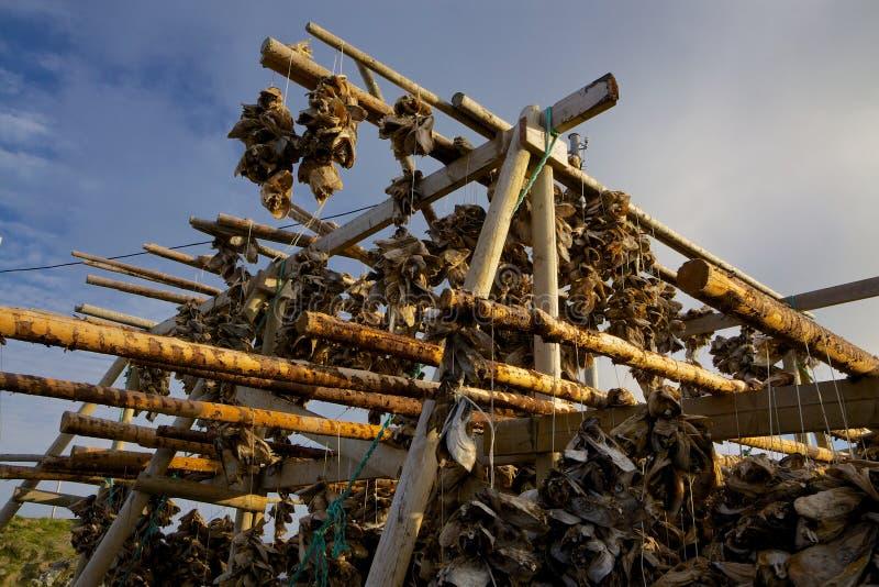 Download Trocknender Stockfish stockfoto. Bild von kabeljau, industrie - 26354576