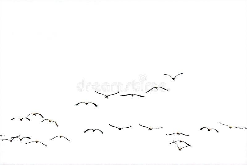 Troep die aan de (geïsoleerde) zon vliegt. royalty-vrije stock afbeeldingen