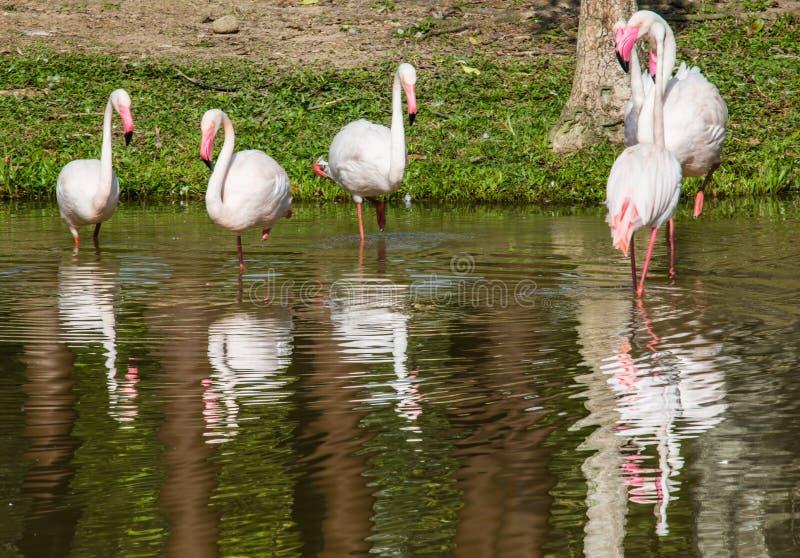 Troep van Flamingo II royalty-vrije stock foto