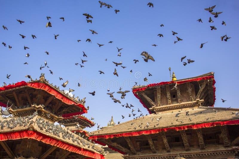 Troep van grijze duiven die in een duidelijke blauwe hemel over de rode daken van oude Aziatische tempels vliegen stock foto