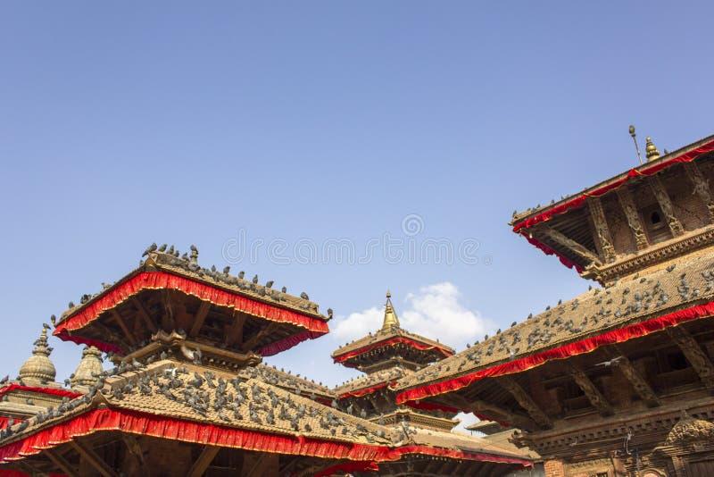 Troep van grijze duiven die op de rode daken van oude Aziatische tempels tegen een schone blauwe hemel zitten stock afbeelding