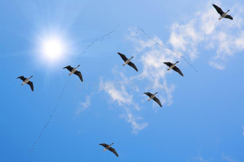 Troep van het migreren