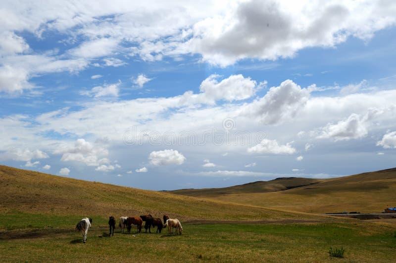 Troep van paarden royalty-vrije stock fotografie