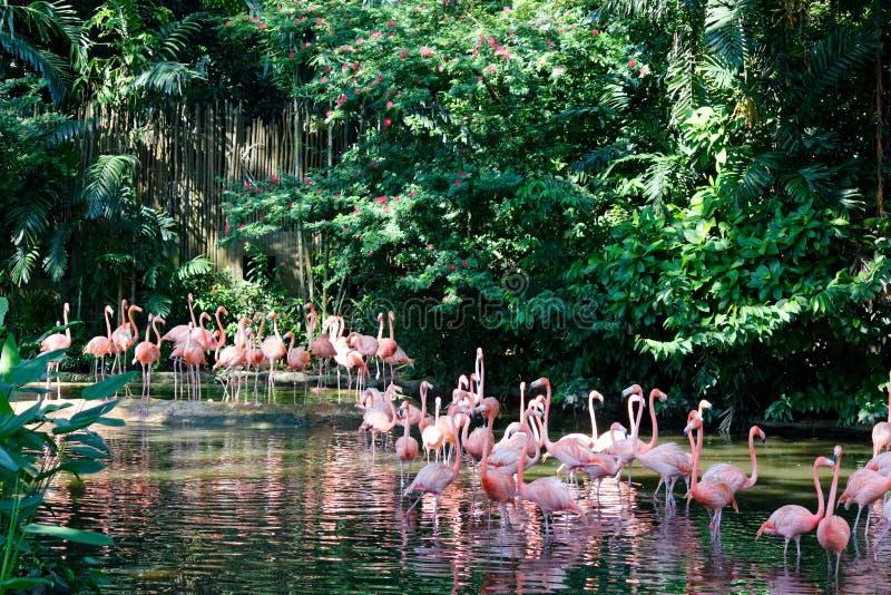 Troep van Roze Flamingo's royalty-vrije stock foto's