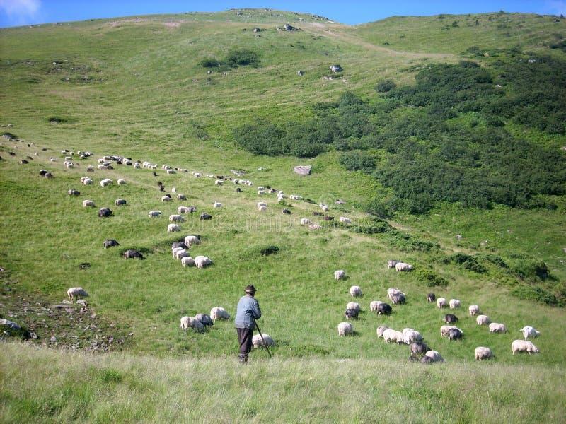 Troep van schapen, herder, de Karpatische Bergen royalty-vrije stock afbeelding