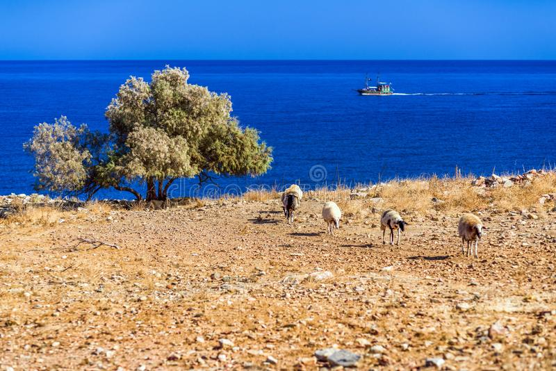 Troep van sheeps op weiland royalty-vrije stock foto