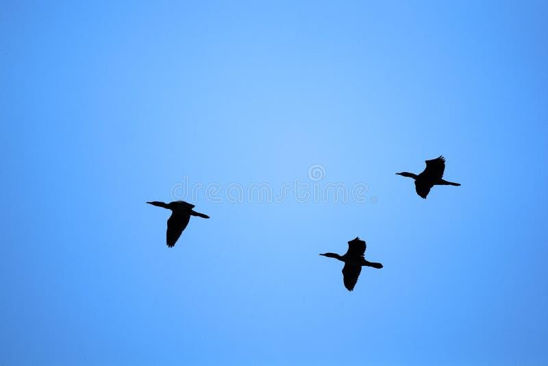 Troep van vogels royalty-vrije stock foto
