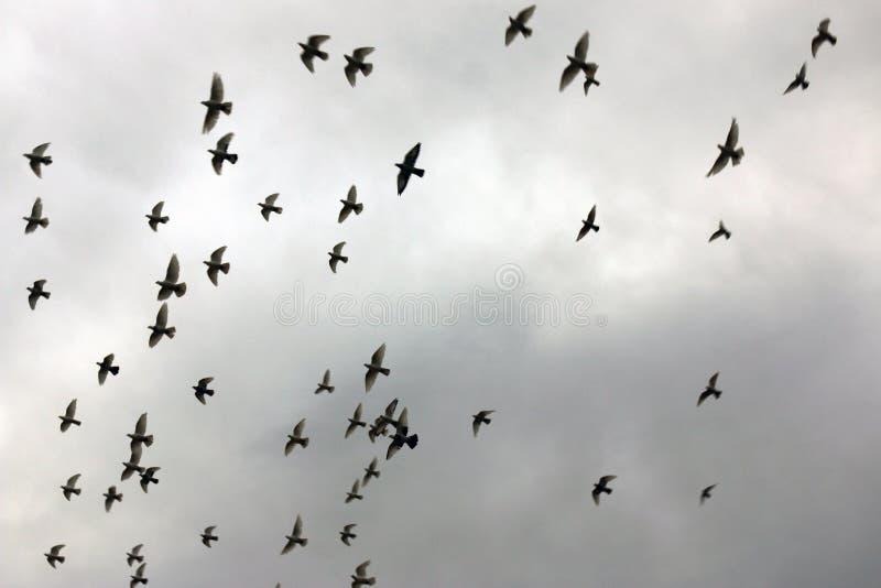 Troep van vogels stock fotografie