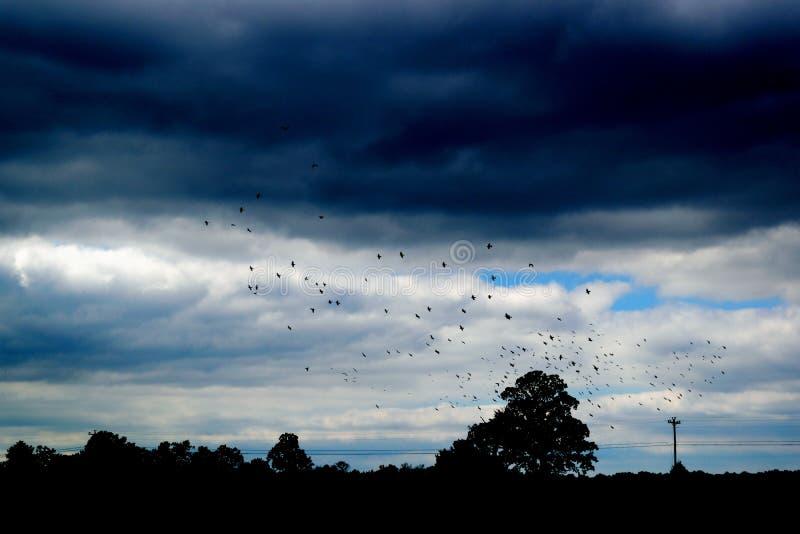 Troep van vogels in bewolkte hemel royalty-vrije stock foto