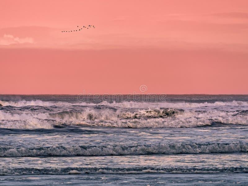 Troep van vogels die in de hemel over het overzees bij dageraad vliegen stock afbeelding