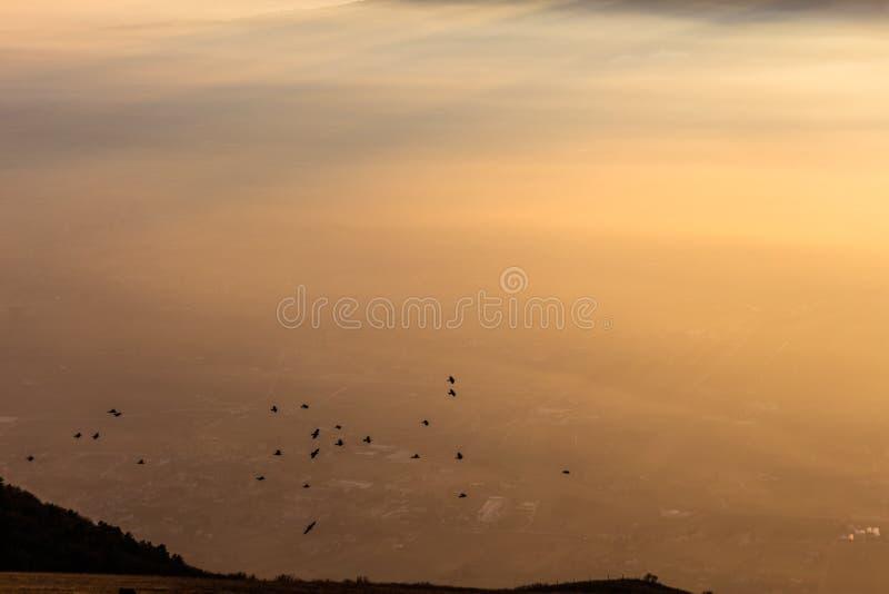 Troep van vogels die over een overzees van mist bij zonsondergang vliegen royalty-vrije stock foto's