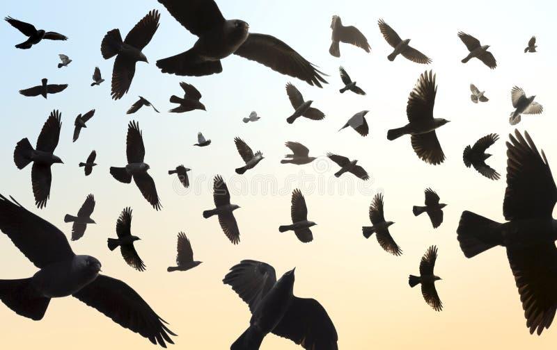 Troep van vogels het vliegen stock afbeeldingen