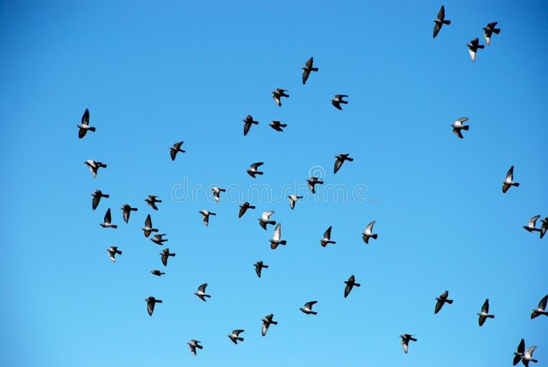 Troep van vogels op een blauwe hemel stock foto