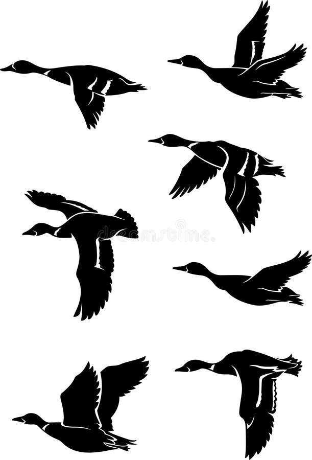 Troep van wilde eenden stock illustratie
