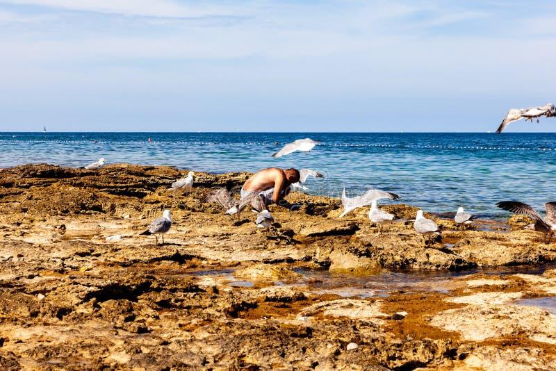 Troep van zeemeeuwen die dichtbij de mens het schoonmaken vissen op het strand vliegen royalty-vrije stock foto's