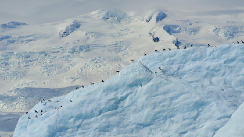 Troep van zeemeeuwen die op een ijsberg rusten stock afbeeldingen