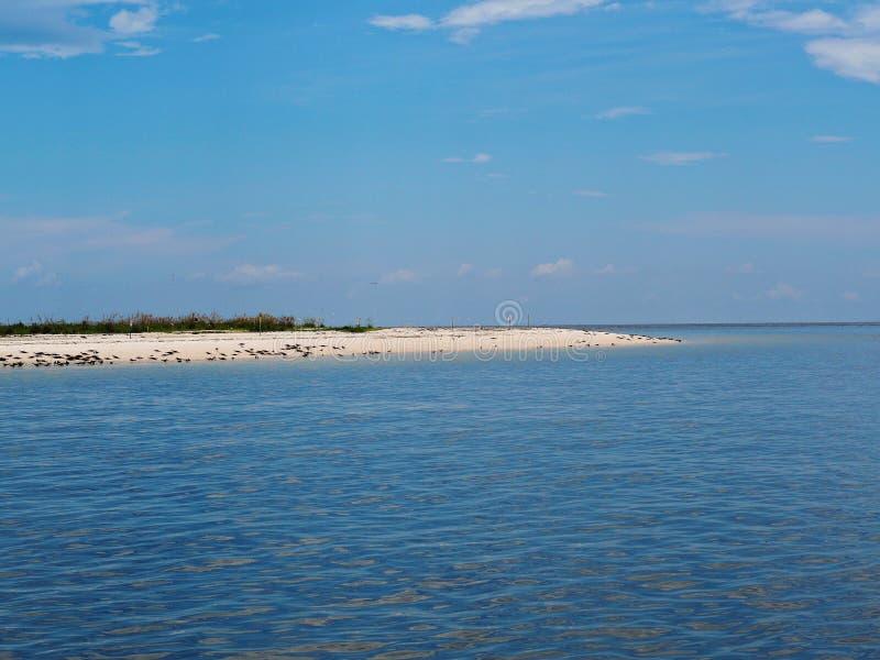 Troep van zeevogels op strand royalty-vrije stock foto's