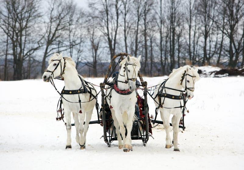 A 'troikca' do russo - três dos cavalos no pequeno trenó imagem de stock royalty free
