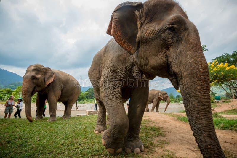 Trois éléphants en parc naturel images libres de droits