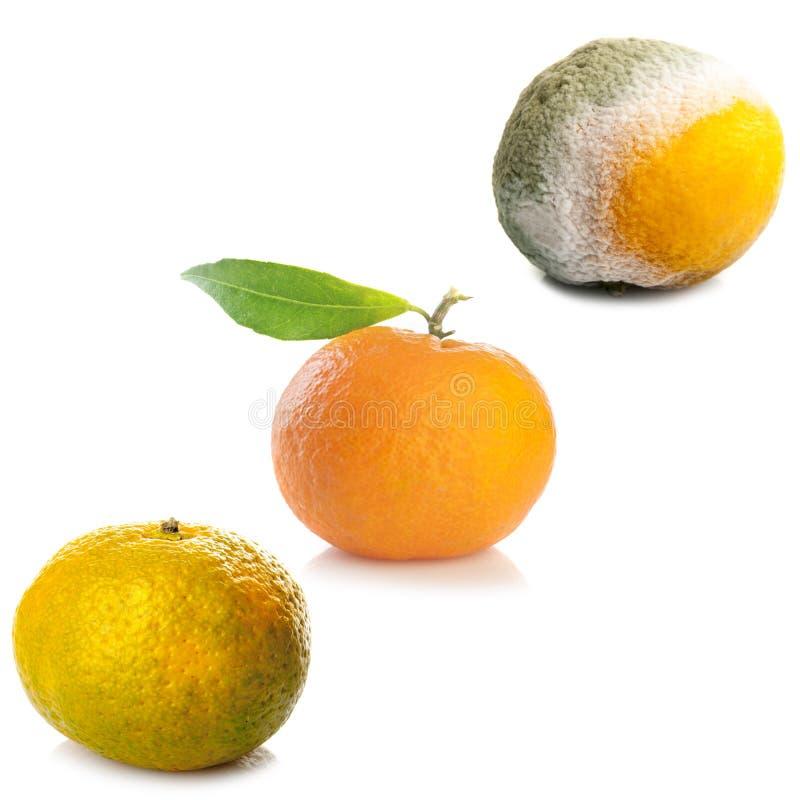 Trois étapes de mandarine photos stock