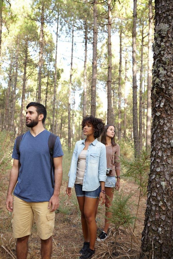 Download Trois Amis Marchant Par Une Forêt Image stock - Image du sain, amis: 76080069