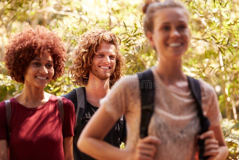 Trois amis millénaires heureux utilisant des sacs à dos sur une hausse dans une forêt, fin  photographie stock libre de droits