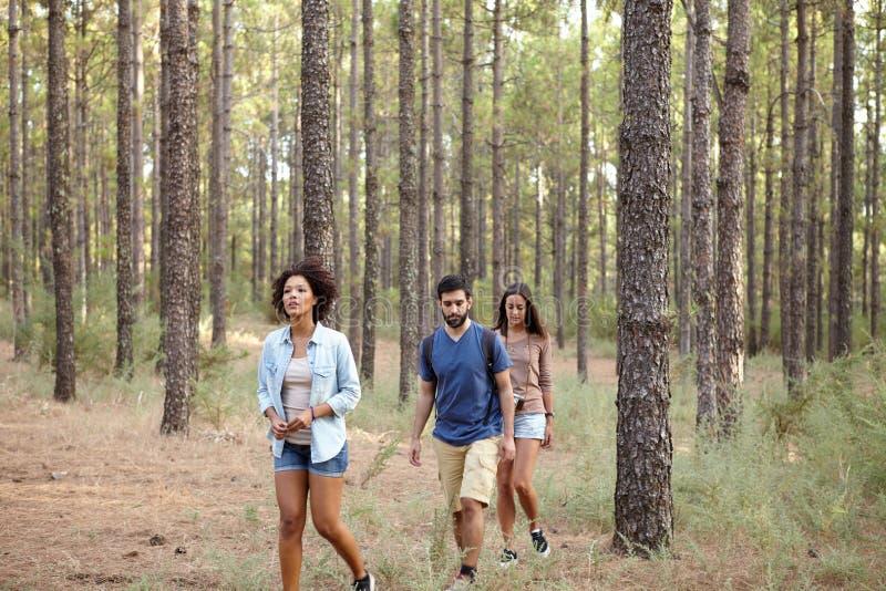Download Trois Amis Perdus Dans Les Bois Photo stock - Image du heureux, normal: 76080280