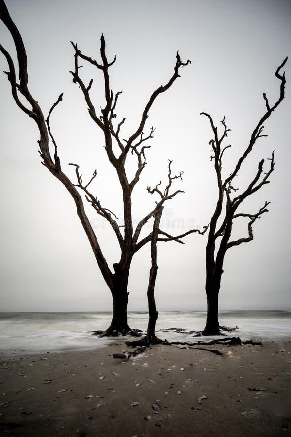 Trois arbres grands se tenant dans le ressac silencieux photo stock