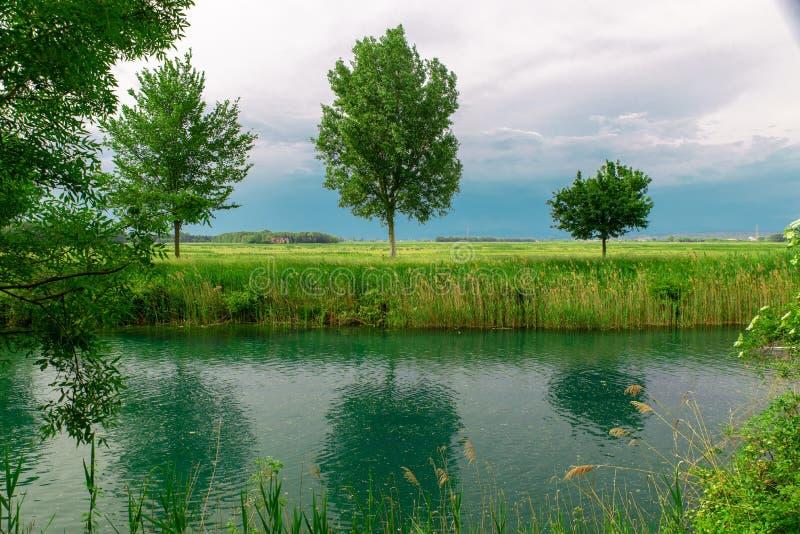 Trois arbres sur la berge, ciel obscurci, l'eau verte verte avec des réflexions photos stock