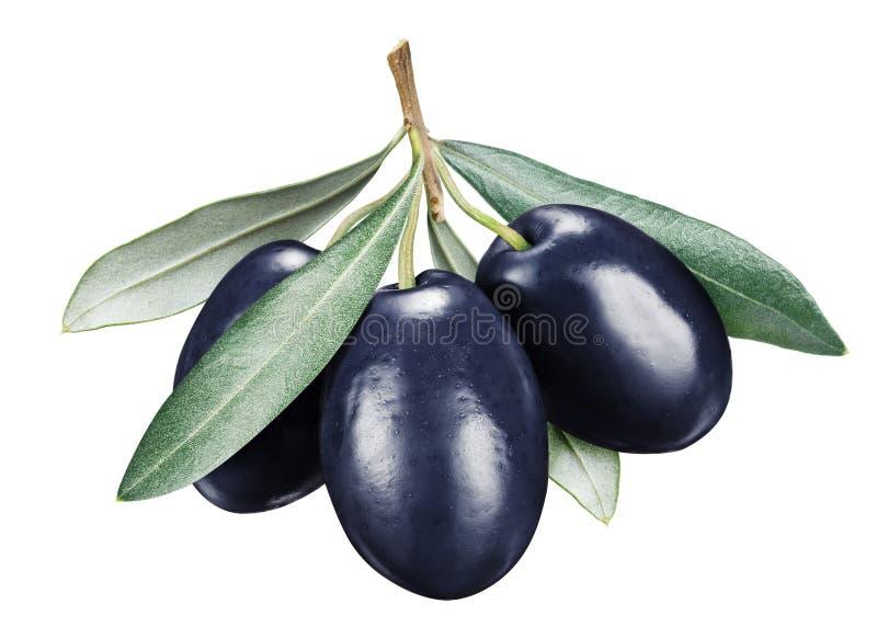 Trois baies noires d'olive mûre avec des feuilles image libre de droits