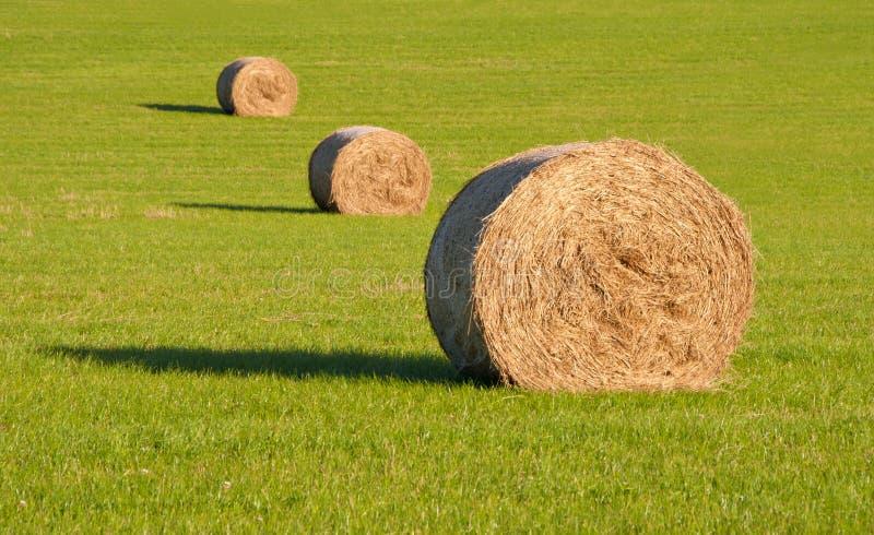 Trois balles de foin rondes dans une ligne sur l'herbe verte photographie stock libre de droits