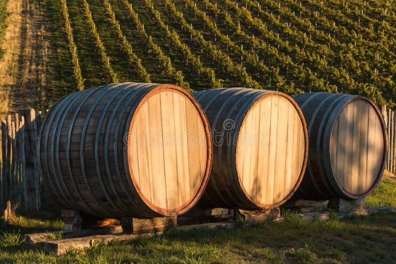 Trois barils de chêne dans le vignoble photo libre de droits