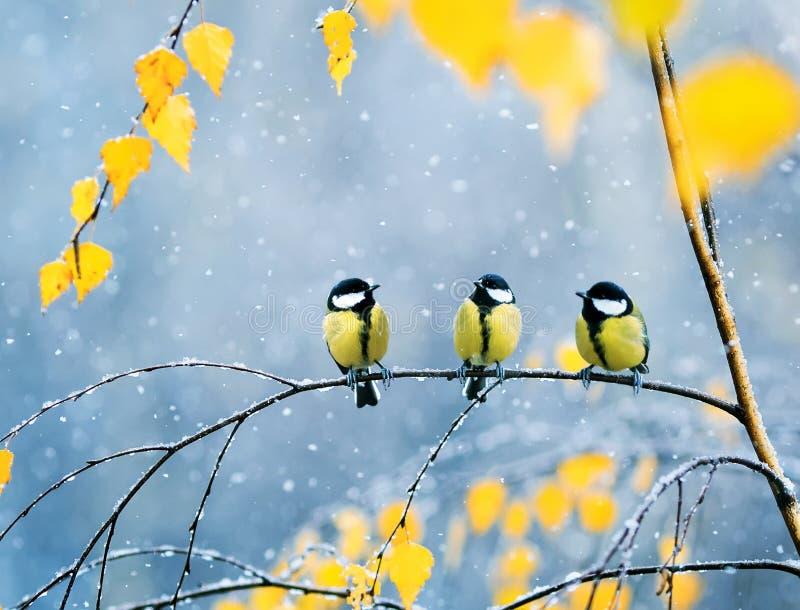 Trois belles mésanges d'oiseaux en parc se reposant sur une branche parmi le Br photographie stock libre de droits