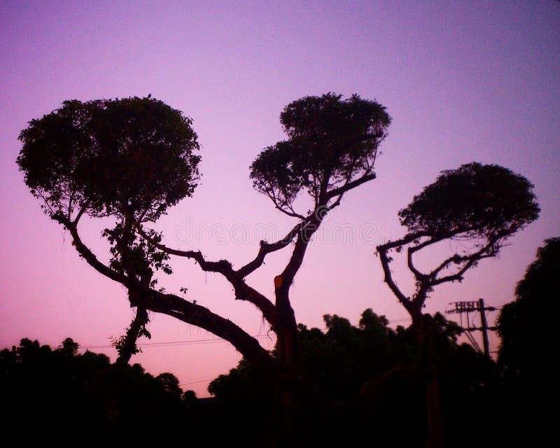 Trois branches d'arbre photos stock