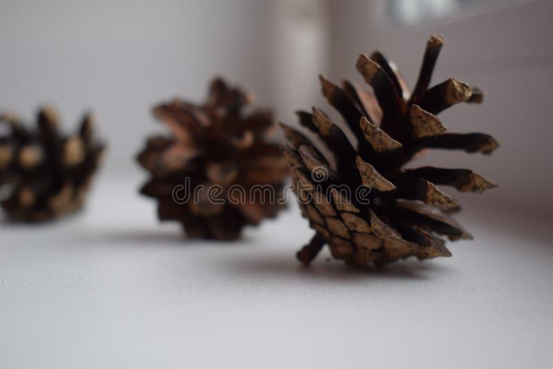 Trois cônes de pin sur le rebord de fenêtre photographie stock libre de droits
