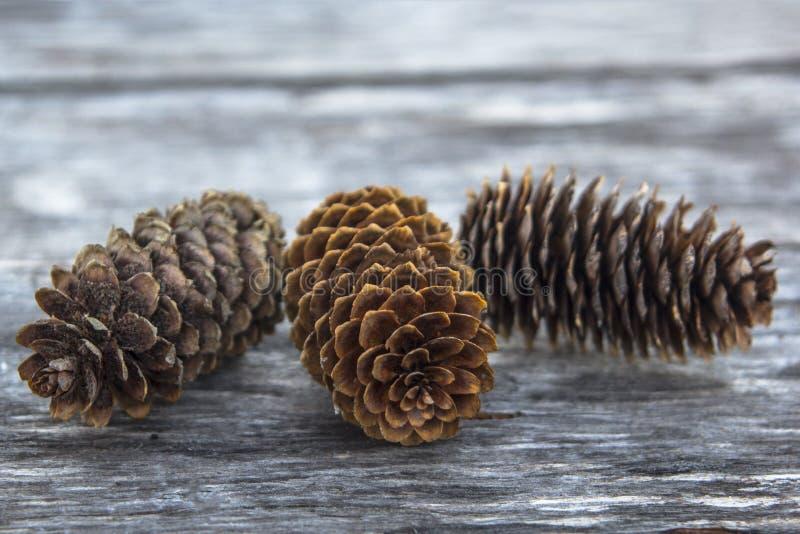 Trois cônes de sapin, plan rapproché photographie stock