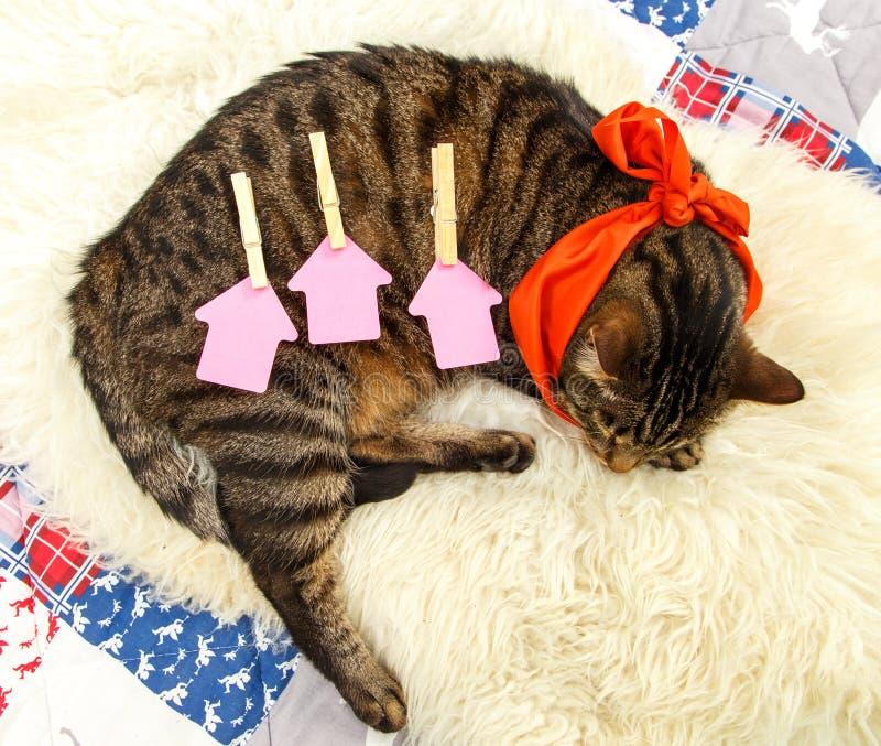 Trois calibres de papier pour des lettres au dos d'un chaton de sommeil photo stock