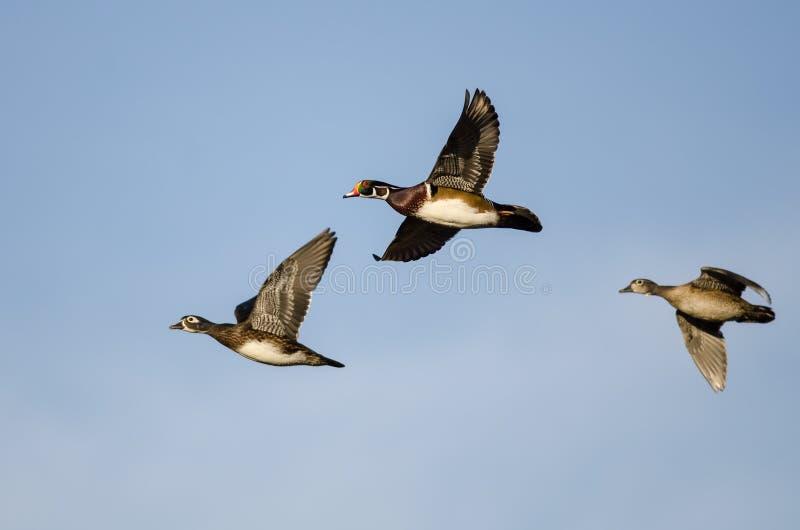 Trois canards en bois volant dans un ciel bleu images libres de droits