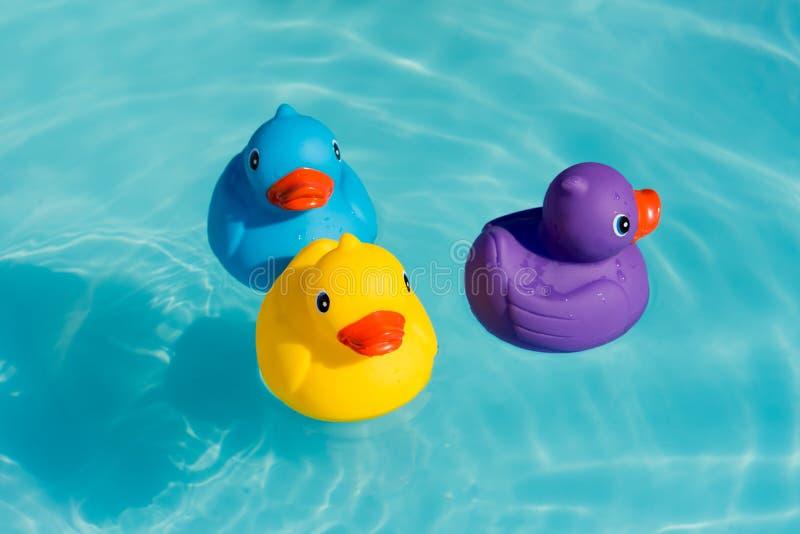Trois canards, jaunes, bleus et pourpres en caoutchouc colorés image stock