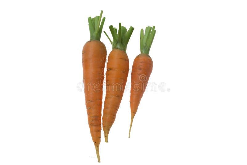 Trois carottes crues fraîches sur le fond blanc photos libres de droits