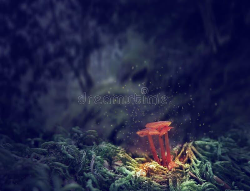 Trois champignons rougeoyants dans la forêt foncée de mystère photos libres de droits