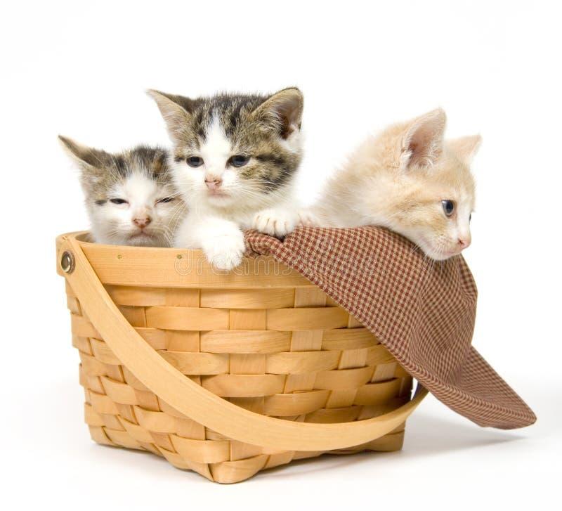 Trois chatons dans un panier image stock