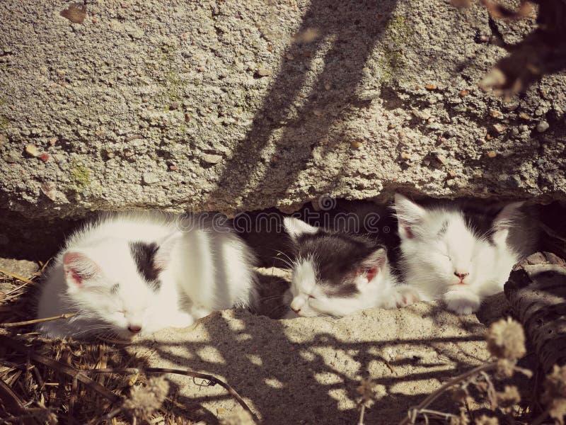 Trois chatons et x28 les prenant un bain de soleil ; color& x29 ; photos libres de droits