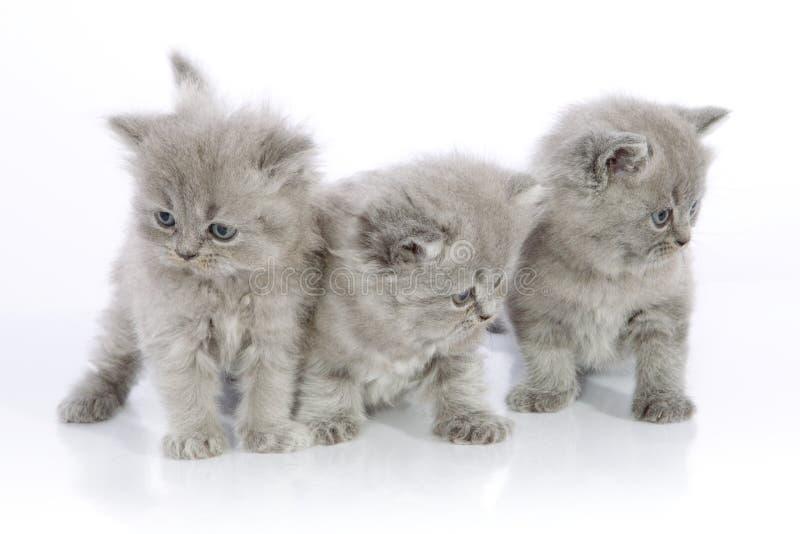 Trois chatons mignons image stock